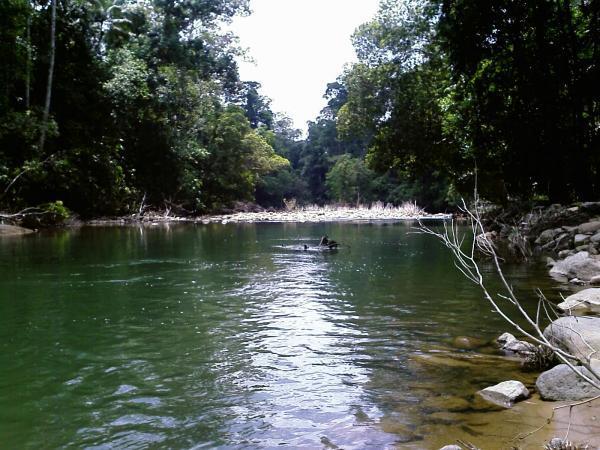 Taman Negara Johor Endau Rompin Selai Segamat
