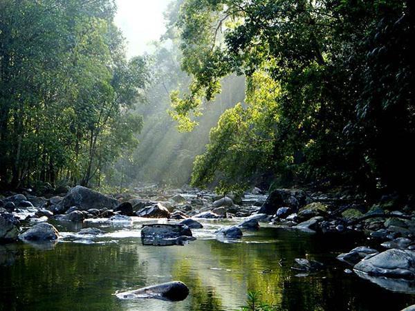 Endau Rompin National Park Rainforest Mersing