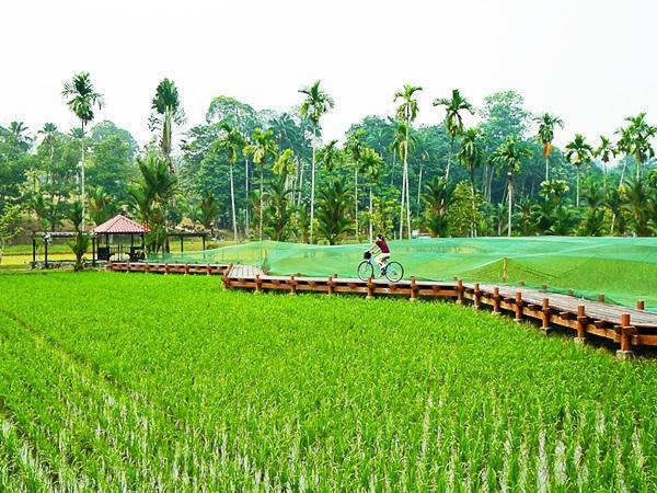 Keindahan Taman Botani Shah Alam